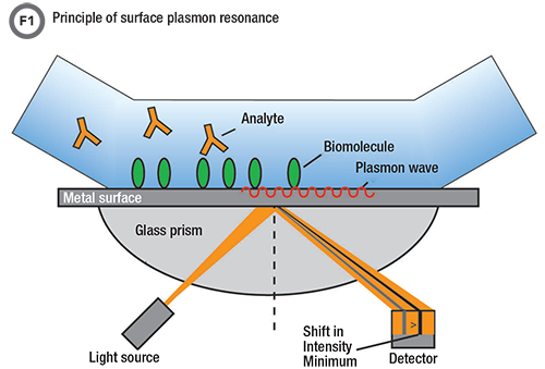 The Role of Surface Plasmon Resonance in Clinical Laboratories   AACC.org